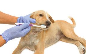 Curso de Hábitos de Higiene en Animales Domésticos