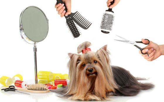 Resultado de imagen para curso de peluqueria veterinaria