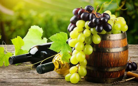 Curso online de Viticultura, Enología y Cata