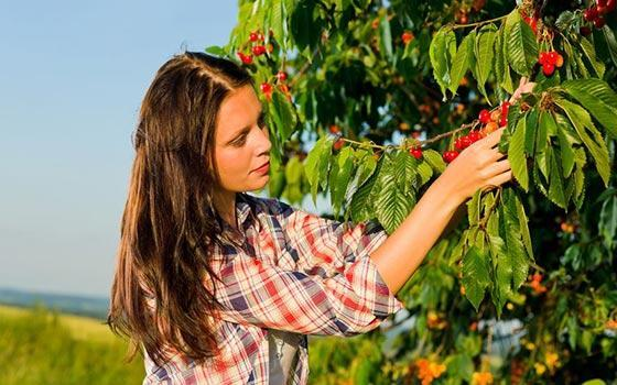 Curso online Profesional de Fruticultura