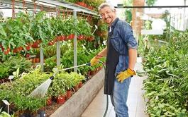 Curso online Profesional de Gestión de la Producción de Plantas y Semillas en Viveros