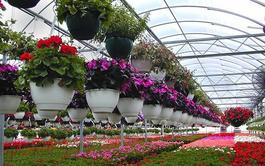 Curso virtual (Online) Profesional de Horticultura y Floricultura
